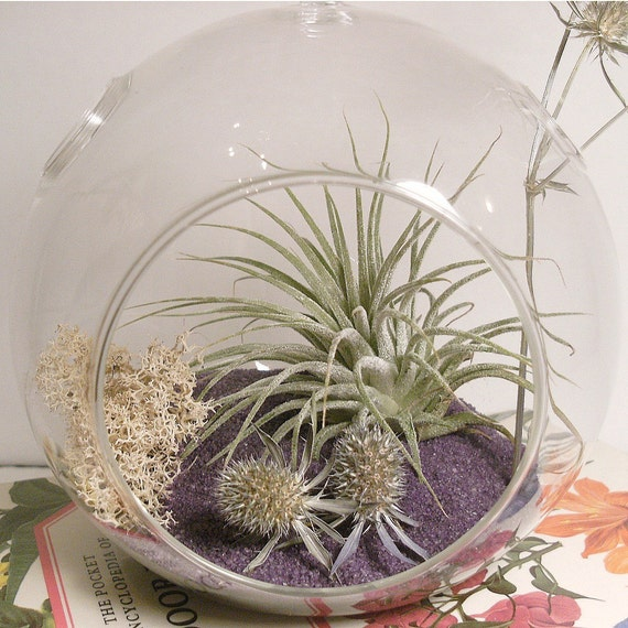 Purple Power Tillandsia Globe