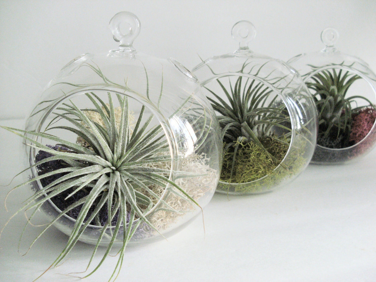 Small hanging air plant terrarium your choice of moss colors for Air plant planters