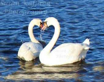 Swans Sharing Hearts ... Original Fine Art...Swan Photography...Swan Hearts...Wildlife Photography...Waterfowl Photography...Mute Swans