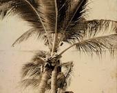 Palm tree Sepia Tropical Beach Photograph  - 11 x 14 art print by Dawn Smith