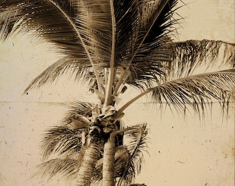 Palm tree Sepia Tropical Beach Photograph  - 11 x 14 art print by Dawn Smith