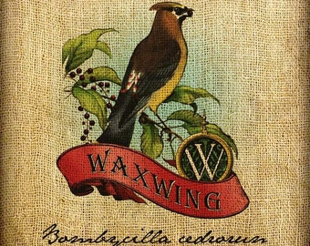Waxwing Scroll Monogram Hand Colored and Tinted Digital Image Transfer Download jpeg or png 300 dpi for Pillows Totes Bags Napkins Towels