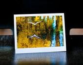 Eco-friendly card, snowy egret, louisiana photography