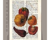 Antique French VEGETABLES/ PEPPER Artwork on a page from vintage Dictionary -Upcycled Book Print