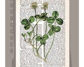 CLOVER - ORIGINAL ARTWORK  printed on Repurposed Vintage Dictionary page -Upcycled Book Print