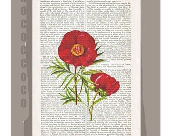 Red PEONY Artwork on a page from vintage Dictionary -Upcycled Book Print
