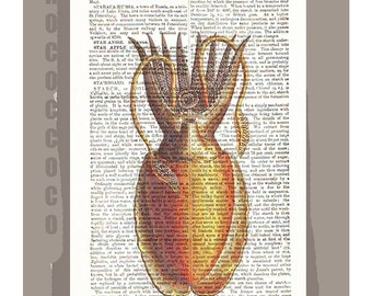 CUTTLEFISH  -ARTWORK  printed on Repurposed Vintage Dictionary page -Upcycled Book Print