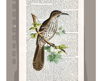 BIRD - ARTWORK printed on Repurposed Vintage Dictionary page 8x10 -Upcycled Book Print