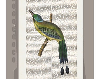 HUMMINGBIRD - ARTWORK printed on Repurposed Vintage Dictionary page 8x10 -Upcycled Book Print