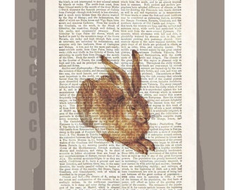 Durer RABBIT -ARTWORK  printed on Repurposed Vintage Dictionary page -Upcycled Book Print