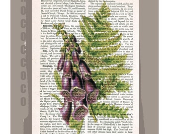 BOTANICAL5 Artwork on a page from vintage Dictionary -Upcycled Book Print