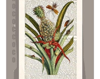 BOTANICAL3 Artwork on a page from vintage Dictionary -Upcycled Book Print