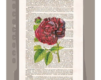 Red ROSE1 Artwork on a page from vintage Dictionary -Upcycled Book Print