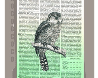 OWL - ORIGINAL ARTWORK printed on Repurposed Vintage Dictionary page 8x10 -Upcycled Book Print