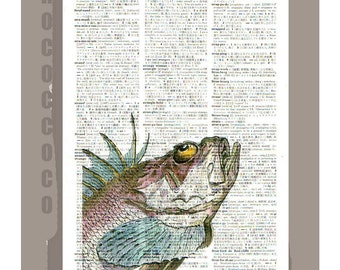 Vintage Spike Fish Portrait1 - ARTWORK printed on Repurposed Vintage Dictionary page- FREE Domestic Shipping
