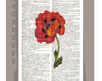Antique POPPY Artwork on a page from vintage Dictionary -Upcycled Book Print