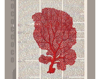 Vintage Red Seafan CORAL5 -ARTWORK printed on Repurposed Vintage Dictionary page 8 x 10 -Upcycled Book Print