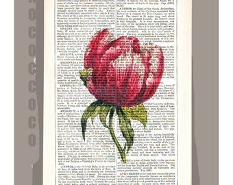 Beautiful TULIP Artwork on a page from vintage Dictionary -Upcycled Book Print
