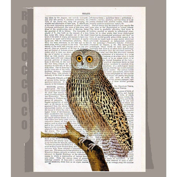 Female OWL - ARTWORK printed on Repurposed Vintage Dictionary page 8x10 -Upcycled Book Print