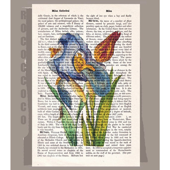 IRIS and Tulip Artwork on a page from vintage Dictionary -Upcycled Book Print