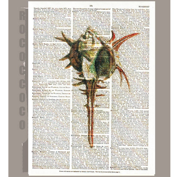 SEASHELL  -ARTWORK  printed on Repurposed Vintage Dictionary page -Upcycled Book Print