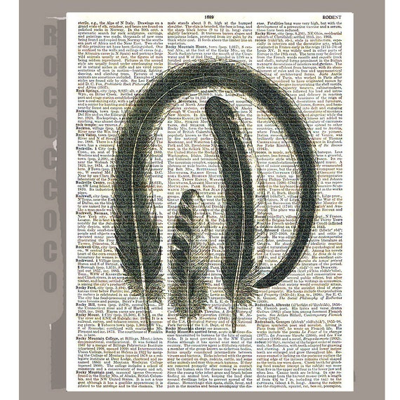 Birds Feathers2  - ORIGINAL ARTWORK printed on upcycled vintage dictionary page book art print  8 X 11