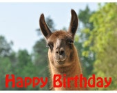 Llama Photo Birthday Card