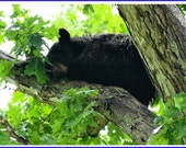 Brown Bear Cub Nature Photo Greeting/Note Card or Photograph