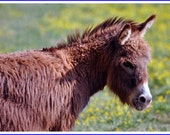 Donkey Nature Photo Greeting/Note Card or Photograph