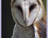 Barn Owl Nature Photo Greeting/Note Card or Photograph
