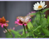 White Peacock Butterfly Nature Photo Greeting/Note Card or Photograph