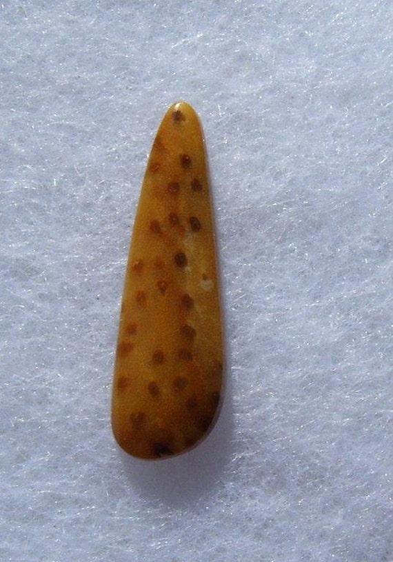 Petrified Palmwood Cabochon