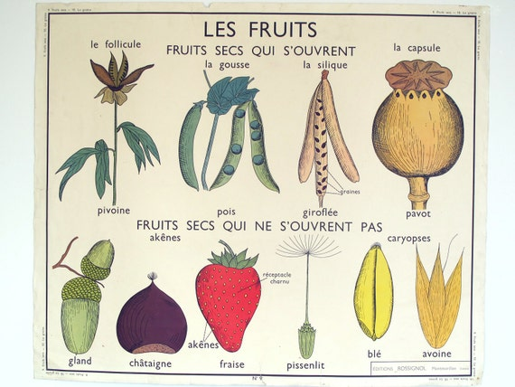 "Vintage french school map, ""the fruits' double sided botanical print industrial look pull down"