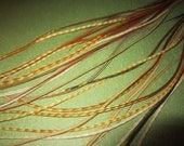 Real Natural 4 Long Feathers for Hair Extensions Ginger Variant FREE Crimp Beads & Instructions