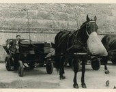"""Vintage Photo """"Horse Lunch Time"""", Photography, Paper Ephemera, Snapshot, Old Photo, Collectibles - BC010"""