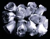 "Heavy roses,  8""x10"" photograph"