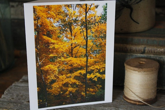 Photo Notecards Fall Autumn Oak Trees orange red yellow leaves foilage