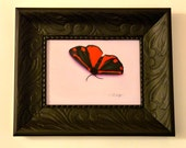 "Original Oil Painting ""Cinnabar Moth"""
