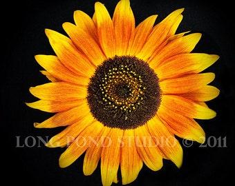 """Sunflower Macro, 8x8"""""""