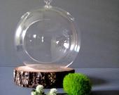 Create Your Own Globe Terrarium