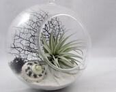 Black & White Terrarium - Extra Large Globe