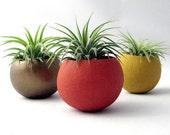 Mini Air Plant Planter Pods  - Autumn Set