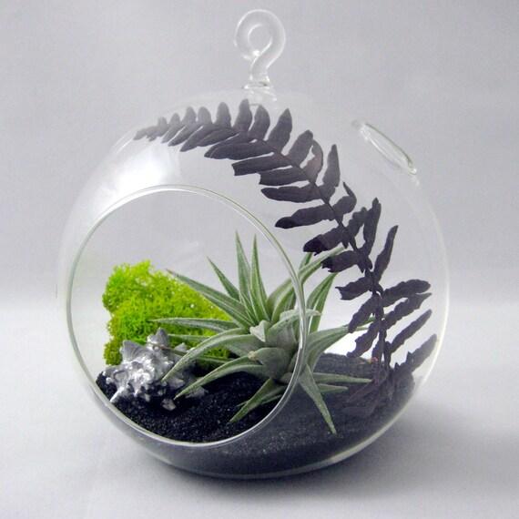 plum fern tillandsia terrarium. Black Bedroom Furniture Sets. Home Design Ideas