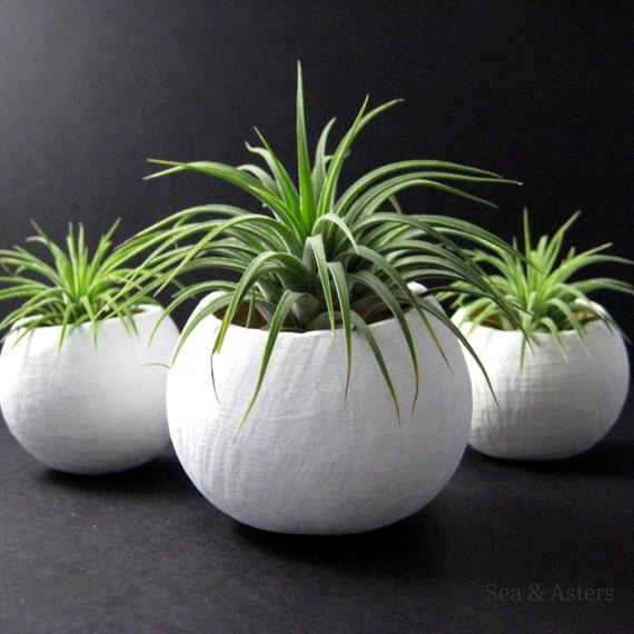 Mini Air Plant Container Pods Set of Three - White Plant Vessel // Planter // Home Decor // Terrarium