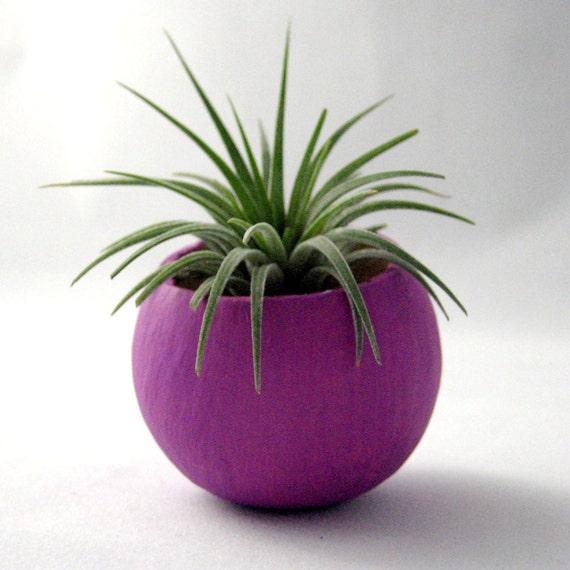 Mini Air Plant  Container Pod - Violet Plant Vessel // Planter // Home Decor // Terrarium // Gifts under 20