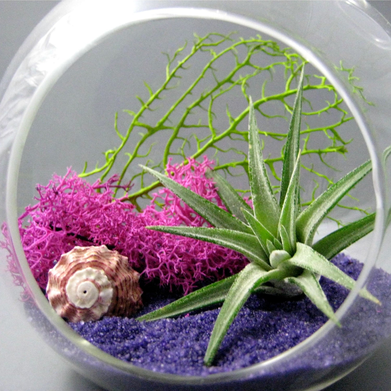 Fuchsia Purple Air Plant Terrarium by seaandasters on Etsy