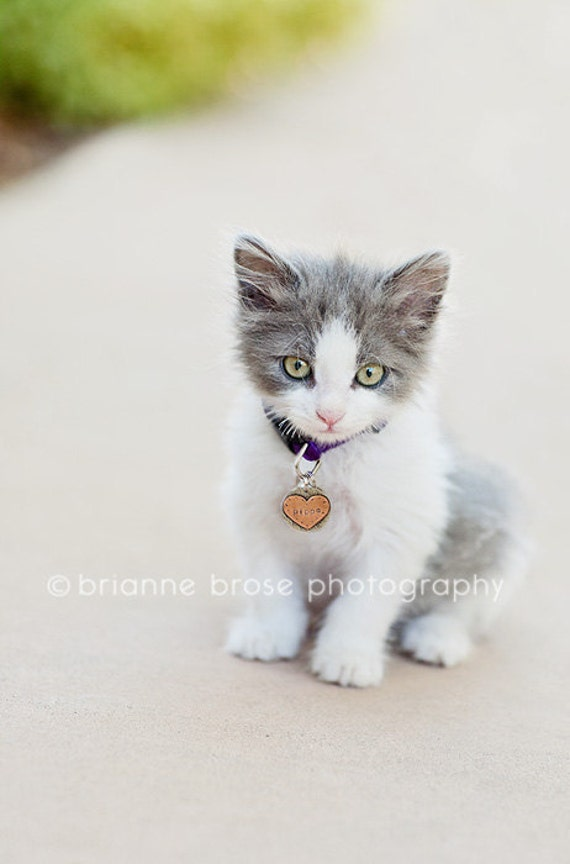 Custom pet ID tag- personalized mixed metal tag for small dogs and cats-  the  Little Ollie