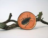fake woodslice and beetle print brooch woodlands series - natural history - beetle print - faux bois