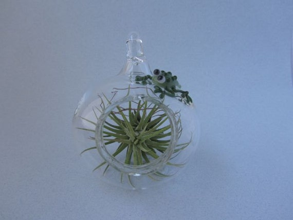 Glass Terrarium with Frog
