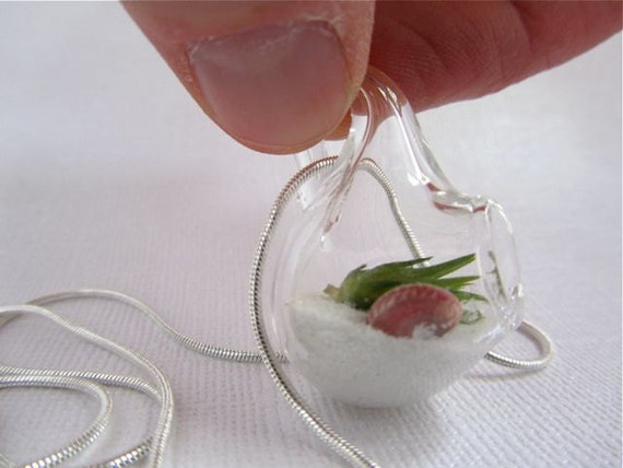 Tiny Silver Beach Pendant Terrarium With Live Air Plant